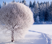 vinter - natur tapet - 180x150
